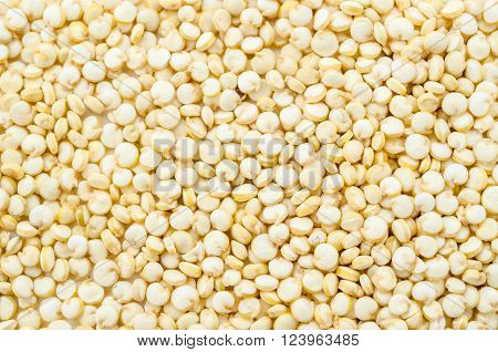 The Close up quinoa seeds as background.