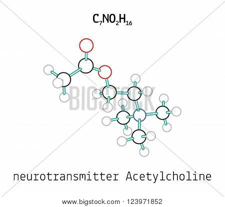 C7NO2H16 Acetylcholine 3d molecule isolated on white