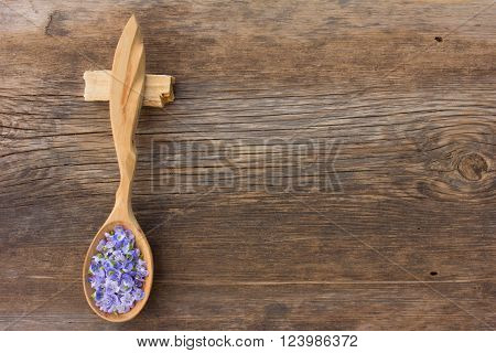 pale blue flower petals plants Persian speedwell in a wooden spoon on old wooden board in the cracks. aromatherapy herbal tea homeopathic medicine. Free space for text. Copy space