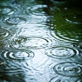 Rain drops rippling in a puddle poster