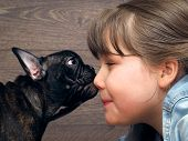 Girl and dog. The girl's face and a large muzzle puppy. Dog black French Bulldog. The relationship of the child and the dog. Concept - trust, love, the contents of the house dogs poster