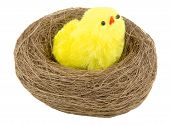 easter chicks in the nest isolated on white poster