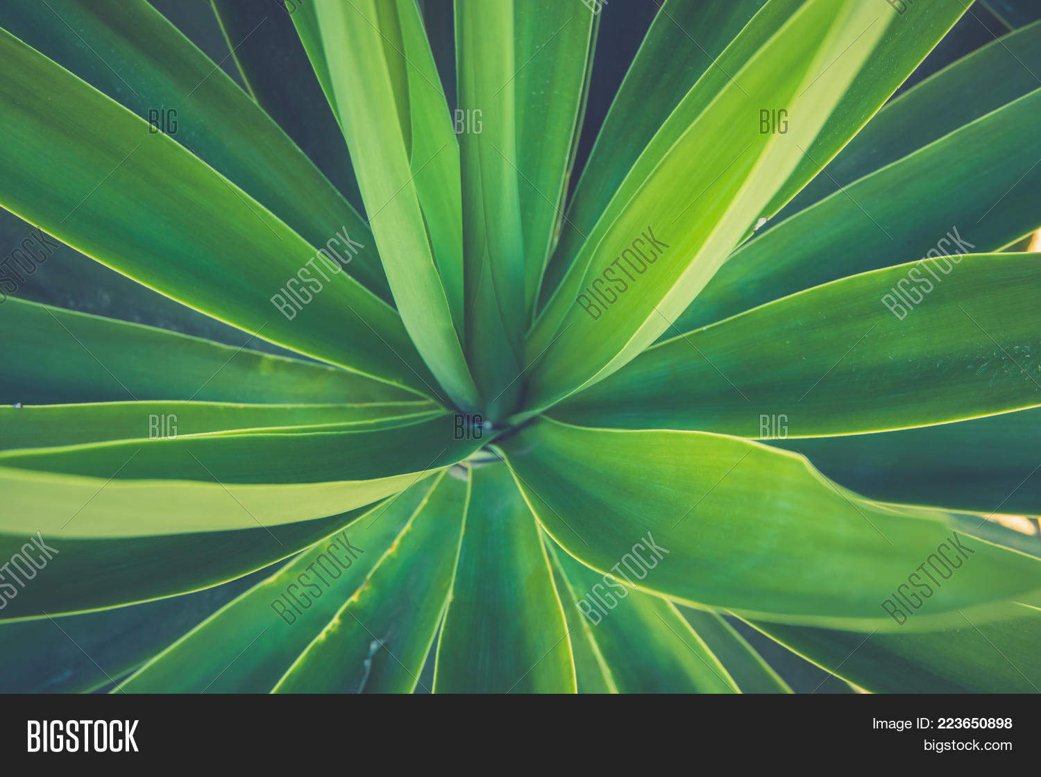 Rosette Of Palm Tree Leaves Growing In Flower Shale Beautiful Natural Geometrical Pattern Vibrant
