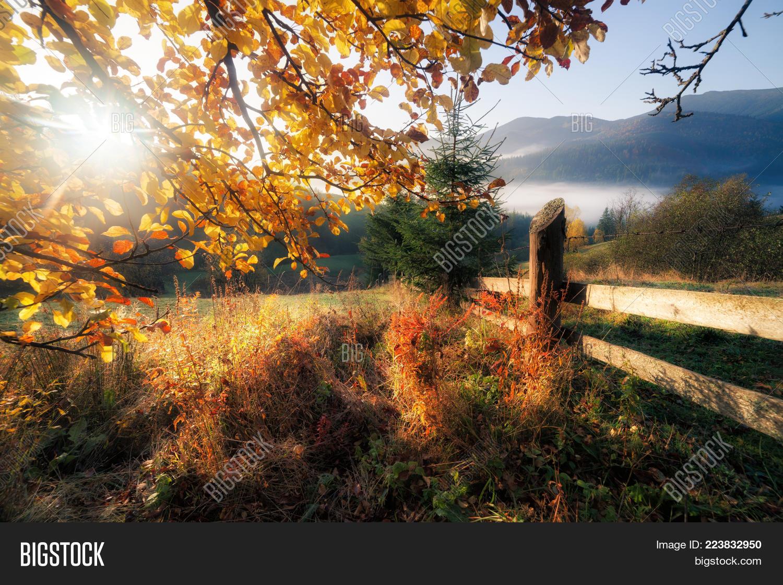 Garden fall colors sunny PowerPoint Template - Garden fall colors ...