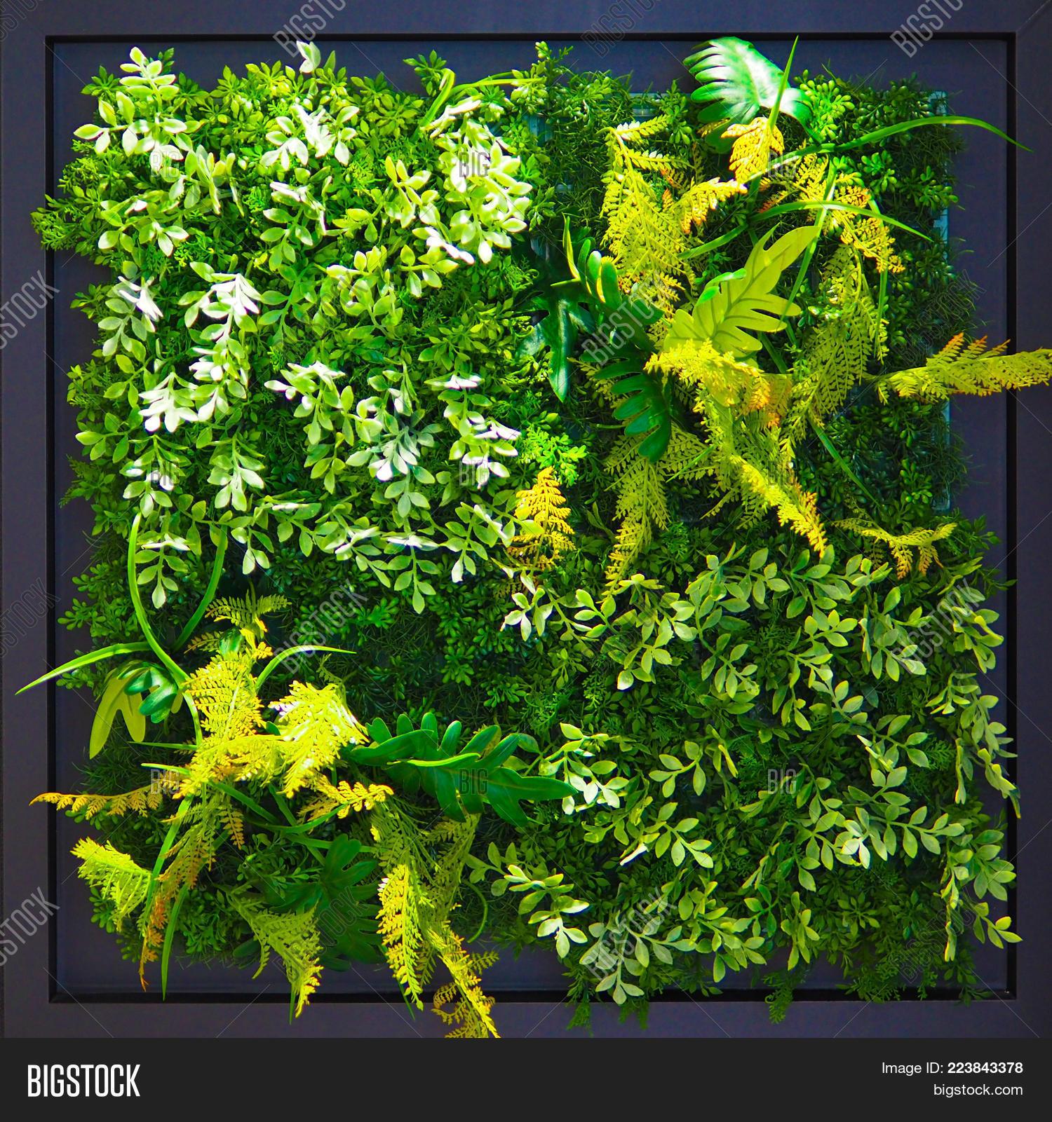 Vibrant Green Foliage Image Photo Free Trial Bigstock