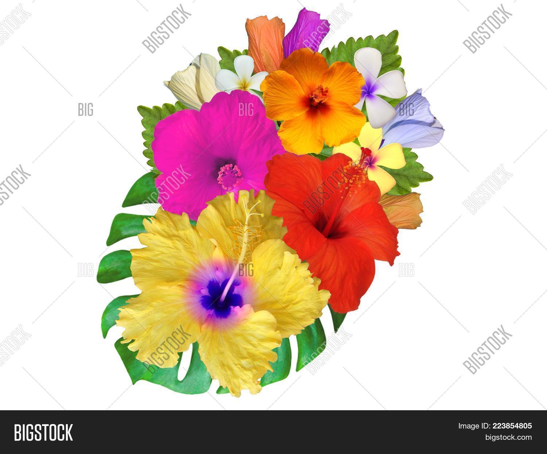 Plants different hibiscus flowers powerpoint template plants frangipani powerpoint template 60 slides izmirmasajfo
