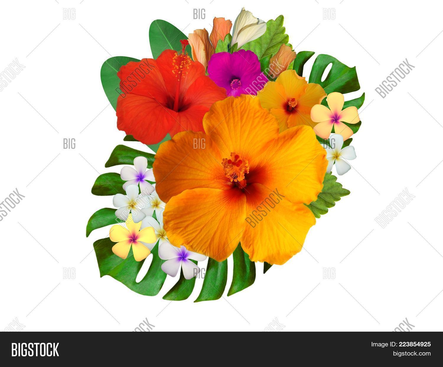 Different Hibiscus Flowers Colors Flower Powerpoint Template