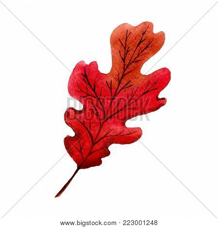 Autumn leaf of oak  in a hand drawn watercolor style isolated. Aquarelle leaf of oak for background, texture, wrapper pattern, frame or border.