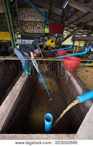 Chiang Rai, Thailand - January 8, 2018: Doi Chaang processing Coffee Fermentation. The pulped coffee beans are put into cement tanks with water and are allowed to ferment for 16-36 hours.