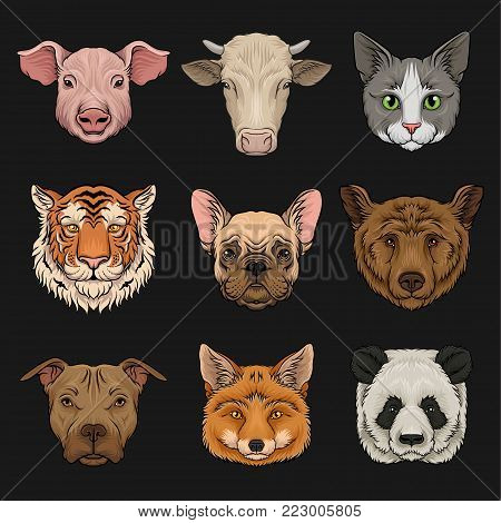 Wild and domestic animals set, heads of pig, cow, bulldog, cat, bear, pug, tiger, fox hand drawn vector Illustrations on a black background