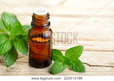 fresh peppermint leaves and essential oil on the table