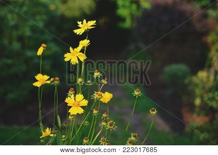 Young green grass and brown ground in a garden, top view, free copy space.