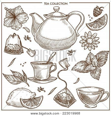 Tea collection and herbal flavorings sketch vector icons. Isolated set of hot teapot and black or green tea cup, lemon, peppermint or aroma herb and earl grey teabags and chamomiles or fruit berry