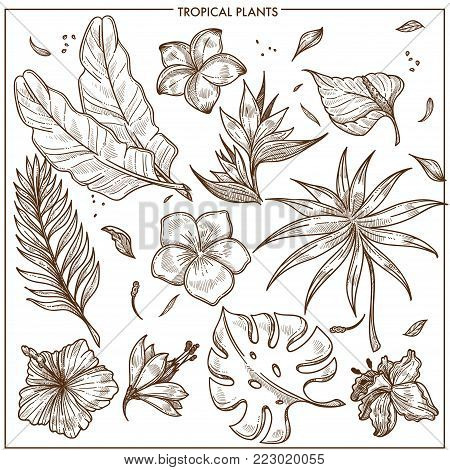 Tropical plants and exotic flowers sketch vector botanical icons collection. Isolated set of tropic banana palm leaf and monstera plant or hibiscus and orchid or plumeria blossom, summer jungle plants