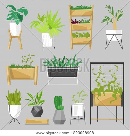 Plants in flowerpots vector potted houseplants indoor botanic cactuses aloe for house decoration with floral collection of botanical garden illustration isolated on white background.