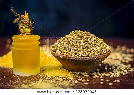Coriander/coriandrum Sativum/dhaniya Oil With Dried Coriander Seeds In A Clay Bowl.