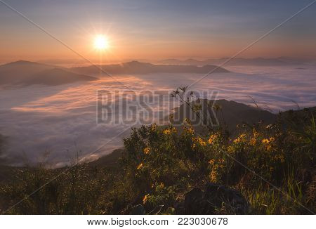 morning mountain view with sunbeam and haze at Doi Pha Tang chiang rai thailand