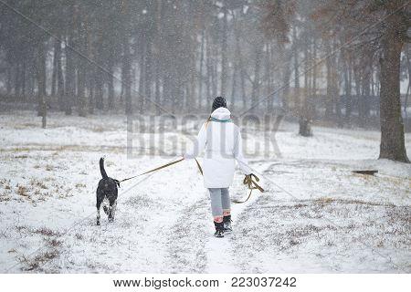 Dog Walks On A Leash Girl In Winter.