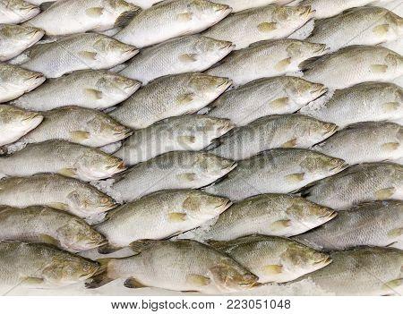 Fresh raw of fish in the market,Fresh fish in street market.