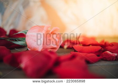 Pink Rose Flower On Wooden Floor Valentine's Day