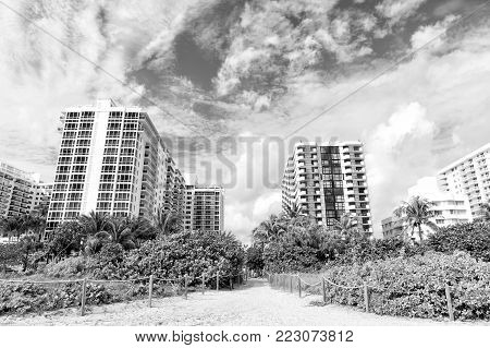 miami. south beach. summer vacation, Idyllic sandy path way from beach with green palm trees to high rise, apartment houses or buildings. City skyline. Urban landscape