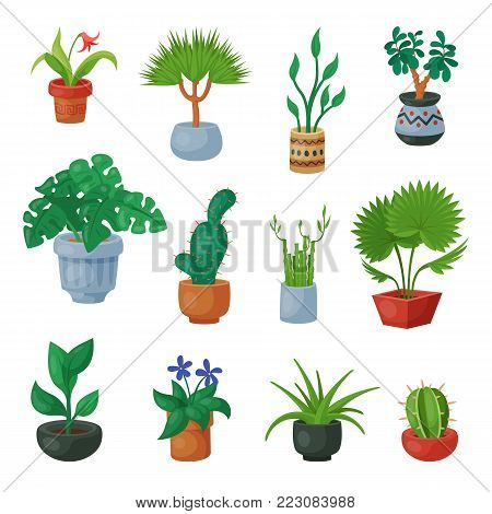 Plants in flowerpots vector potted flowery houseplants for interior decoration with botanic collection floral cactuses in pots and flowers in botanical garden illustration isolated on white background.