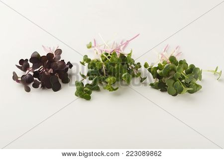 Micro greens variety isolated on white background, copy space. Assortment of baby, mockup for healthy eating and organic restaurant cooking advertisement