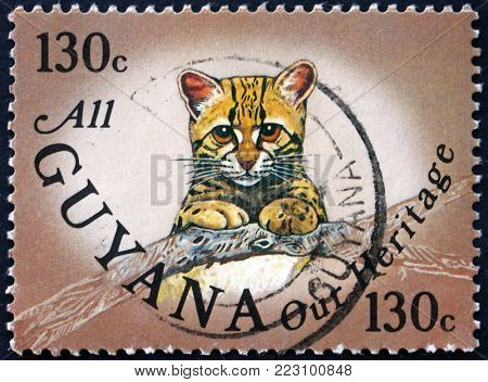 GUYANA - CIRCA 1985: a stamp printed in Guyana shows ocelot cub, leopardus pardalis, wild cat, circa 1985