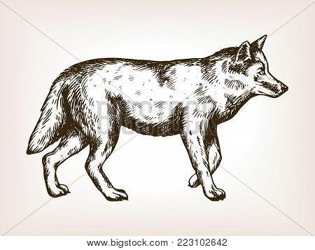 Wolf animal engraving vector illustration. Brown aged background. Scratch board style imitation. Hand drawn image.