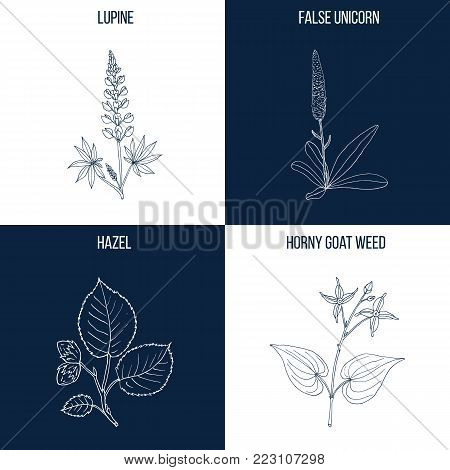 Vector collection of four hand drawn medicinal and eatable plants, lupine, false unicorn, hazel nut, horny goat weed