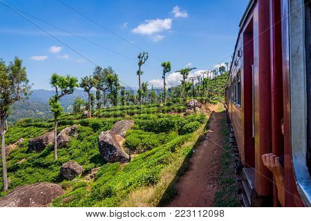 By Train Over Tea Plantation, Sri Lanka