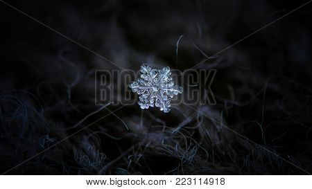 Real snowflake glittering on dark woolen background. Macro photo of real snow crystal: tiny stellar dendrite with glossy relief surface, perfect hexagonal symmetry and short, ornate arms.