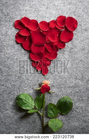 Red rose and petals in shape of a heart - Romantic image with a single rose with one petal on its stem and the others above it in a shape of a red heart, on a vintage grey fabric background.