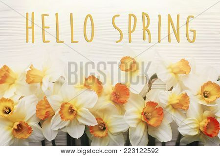 Hello Spring Text. Spring Image Flat Lay With Beautiful Yellow Daffodils In Soft Light On White Wood