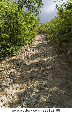 Steep descent on a dirt road in a mountain forest. Crimea.