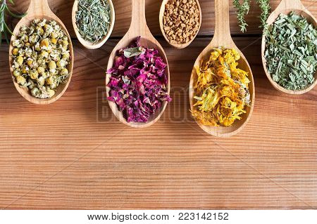 Dried herbs on spoons on a wooden background with copy space - chamomile, horsetail, rose petals, fenugreek seeds, calendula, plantain