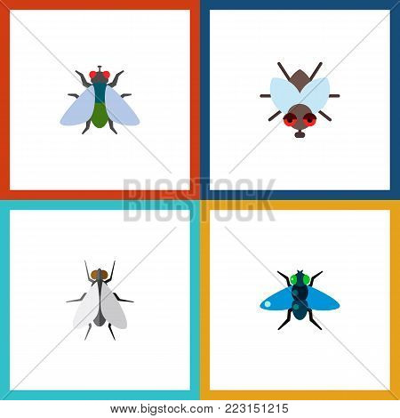 Icon flat fly set of fly, buzz, insect and other vector objects. Also includes fly, insect, buzz elements.