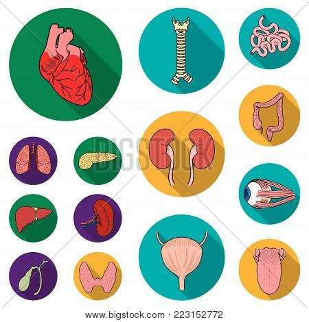 Human organs flat icons in set collection for design. Anatomy and internal organs vector symbol stock  illustration.