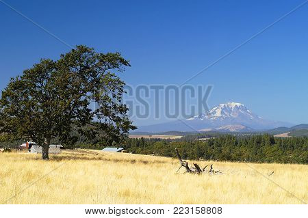 Rural scene in Goldendale, WA at midday with single tree in golden field and clear, blue sky