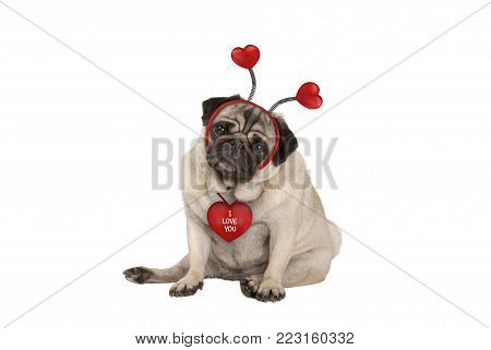 cute Valentine's day pug puppy dog, sitting down, wearing hearts diadem, isolated on white background