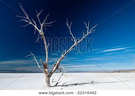 Alter Baum in der Wüste