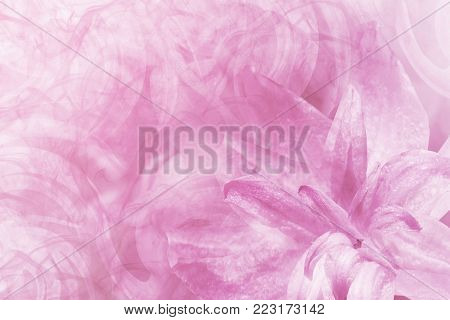 Floral  abstract light pink-white background.   Petals of a lily flower on a white-pink frosty background. Close-up. Flower collage for postcard.  Nature.