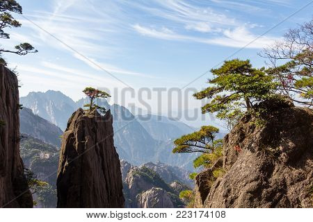 Solitary tree in the Grand Canyon of the West Sea on Mt Huangshan, Yellow Mountain, Anhui, China. Mount Huangshan is one of the most famous of China, and has inspired hundreds of poets and painters