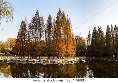 Autumn in Park, Qingdao, Shandong province, China