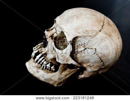 Fiberglass human skull side view on a black background.
