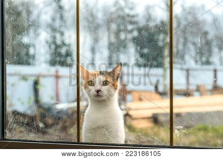 beautiful cat sitting on a window in a country house