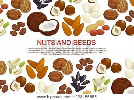 Nuts and seeds or fruit kernels poster of almond, pistachio or pumpkin and sunflower seeds, filbert nut or peanut and walnut, coconut or hazelnut and legume beans. Vector information design template