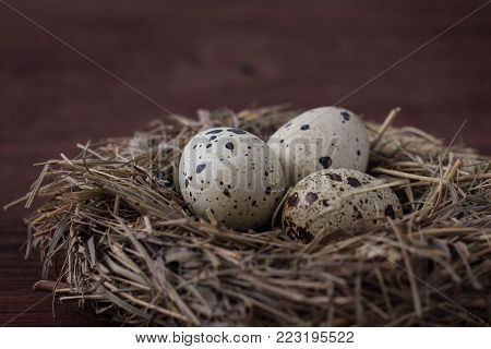 Quail eggs in a Nest on a Dark Brown Wooden background.