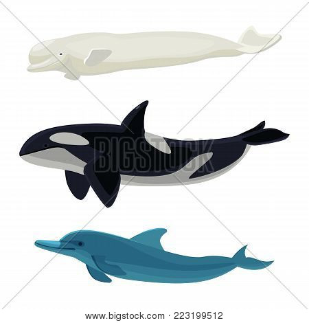 Set of dolphin, killer whales and orca aquatic placental marine mammals vector illustration isolated on white background, big fish creatures realistic design