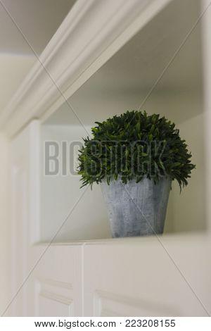 Houseplant in pot on open shelf in the kitchen